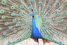 Birdland Animal Park, Batemans Bay, Australia