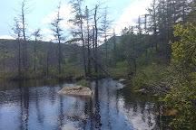 Zealand Falls Trail, New Hampshire, United States