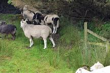 Kells Sheep Centre, Kells, Ireland