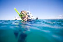 Moonraker Dolphin Swims, Sorrento, Australia