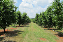 Isom's Orchard, Athens, United States
