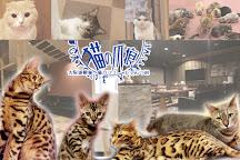 Cat Cafe Nyantsume, Osaka, Japan