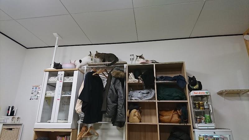 ねこカフェ猫八