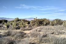 Arthur B. Ripley Desert Woodland State Park, Lancaster, United States
