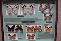 Nawa Insect Museum Haimurubushi, Kohama-jima Taketomi-cho, Japan
