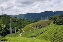 Kyoto Obubu Tea Farms, Wazuka-cho, Japan