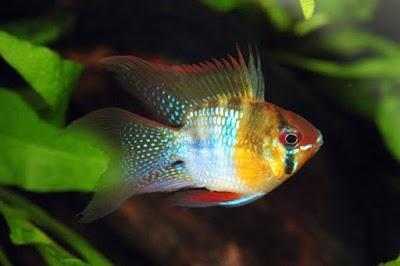 Golden Aquarium