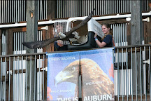 Southeastern Raptor Center, Auburn, United States