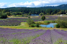 Pelindaba Lavender Farm, Friday Harbor, United States