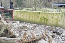 Bowland Wild Boar Park, Preston, United Kingdom