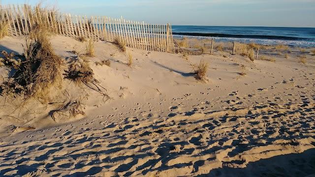 Halsey Neck Beach