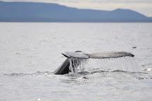 Elding Whale Watching Akureyri, Akureyri, Iceland