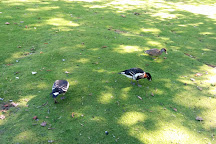 Prinknash Bird And Deer Park, Cranham, United Kingdom