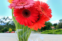 The Big Bouquet, Healesville, Australia