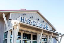 Harvest Ridge Winery, Marydel, United States