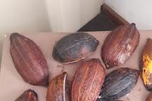 Chocolate Araucaria, Campos Do Jordao, Brazil