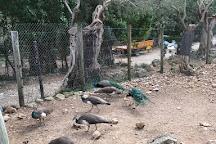 La Reserva Puig de Galatzo, Parc de Natura, Puigpunyent, Spain