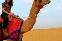 Alibaba Camels, Jaisalmer, India
