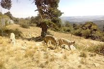Les Loups du Gevaudan, Saint-Leger-de-Peyre, France