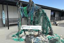 The Marine Mammal Center, Sausalito, United States