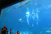 Georgia Aquarium, Atlanta, United States