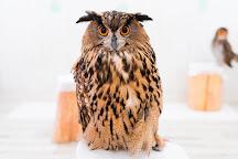 Owl Cafe Akiba Fukurou, Chiyoda, Japan