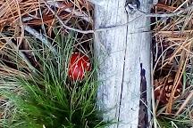 Sugar Pine Walk, Laurel Hill, Australia