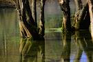 Bregava River
