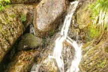 Slieve Foye Woods, Carlingford, Ireland