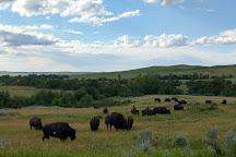 Oxbow Overlook, Theodore Roosevelt National Park, United States