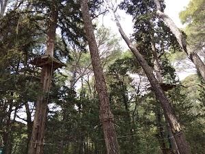 La Forêt d'Acrobates & Tir Aventure