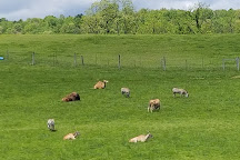 Fort Chiswell Animal Park, Max Meadows, United States