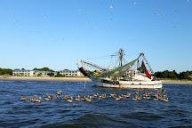 Captain Derek's Dolphin Adventure, Tybee Island, United States