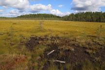 Pyha-Hakki National Park, Saarijarvi, Finland