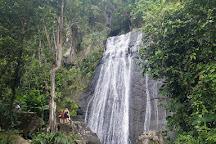 El Yunque Rain Forest, El Yunque National Forest, Puerto Rico