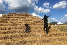 Corn Dawgs Corn Maze, Loganville, United States