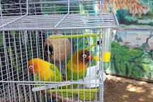 Refugio Herpetologico de Costa Rica, Santa Ana, Costa Rica