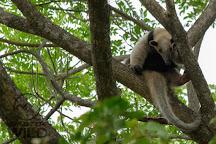 Monteverde Wild, Monteverde, Costa Rica