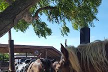 Provo Ponies, Providenciales, Turks and Caicos