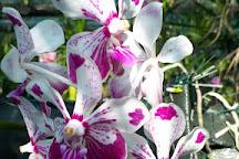 Le Jardin d'Orchidees, Saint-Joseph, Reunion Island