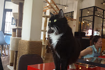 The Cat Cafe, Singapore, Singapore