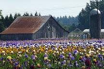 Schreiner's Iris Gardens, Salem, United States