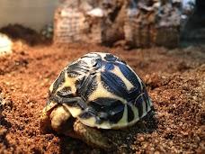 Evolution Reptiles oxford