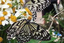 Simply Butterflies Conservation Center, Bilar, Philippines