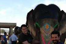 Elefunenjoy, Jaipur, India