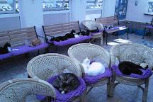 Mann Cat Sanctuary, Santon, United Kingdom