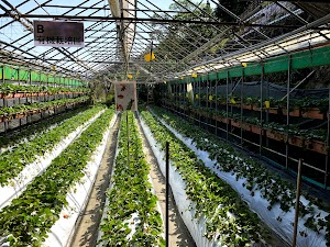 東林草莓農場