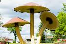 World's Largest Mushrooms