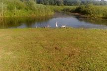 Special Nature Reserve Obedska Bara, Sremska Mitrovica, Serbia
