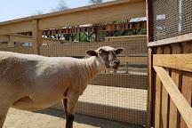 Zoomars at River Street Ranch, San Juan Capistrano, United States